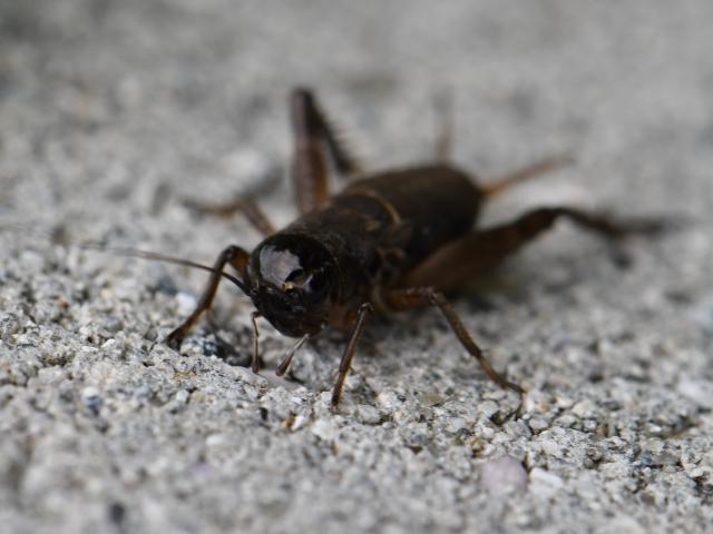 虫の知らせ